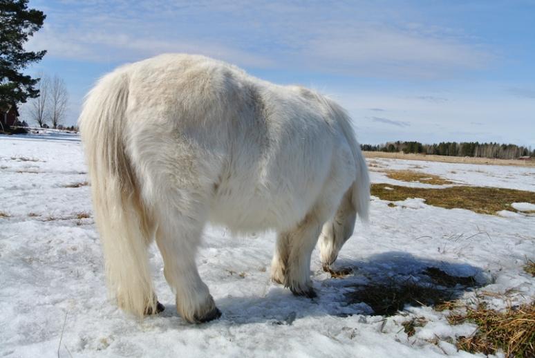 white_pony_2