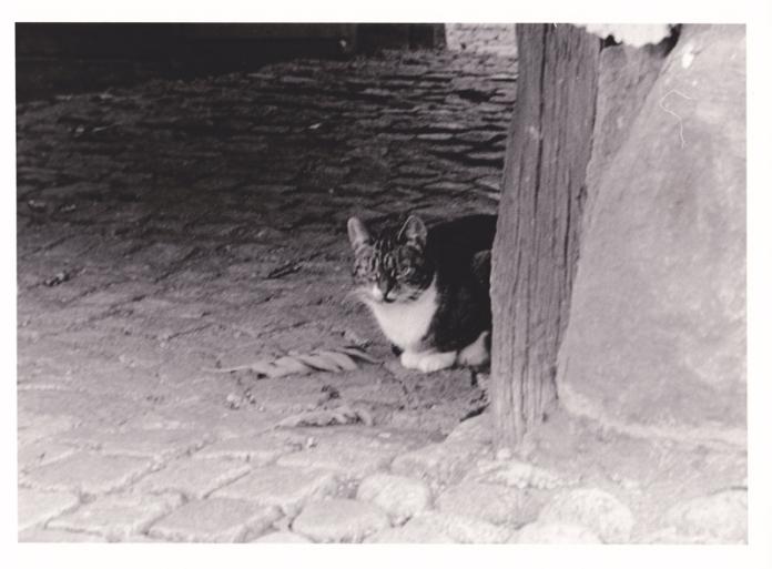 katt_800